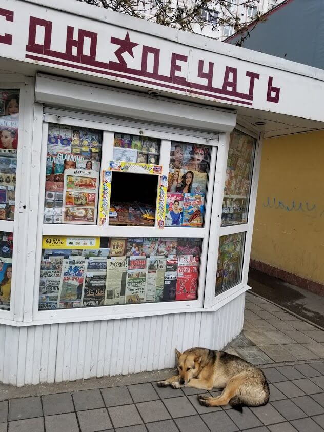 Stray dog in front of a newsstand in Kislovodsk