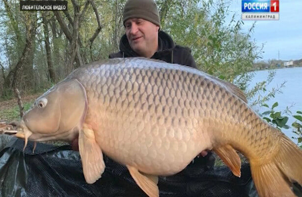 Giant fish caught in Russia