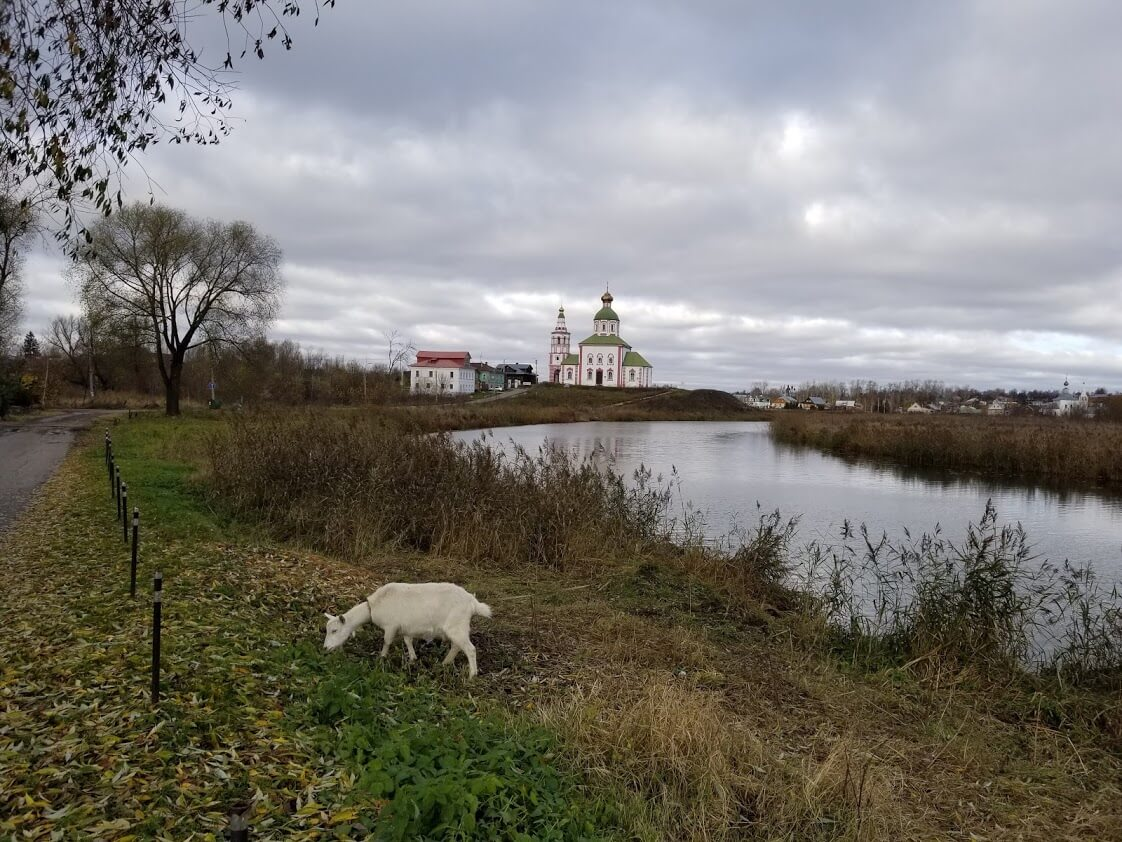Goat in front of river and church in Suzdal