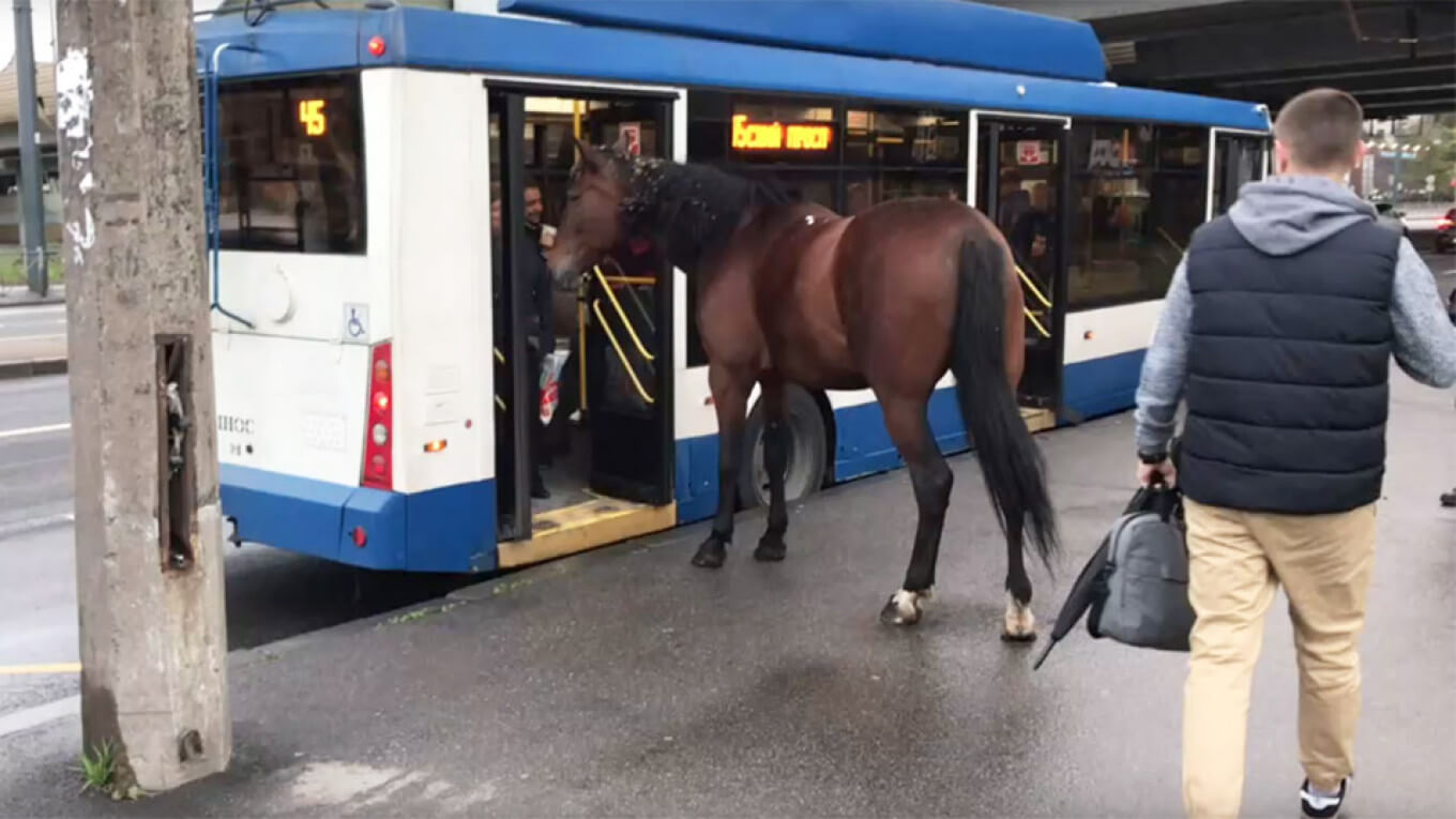 Horse trying to board bus in Russia