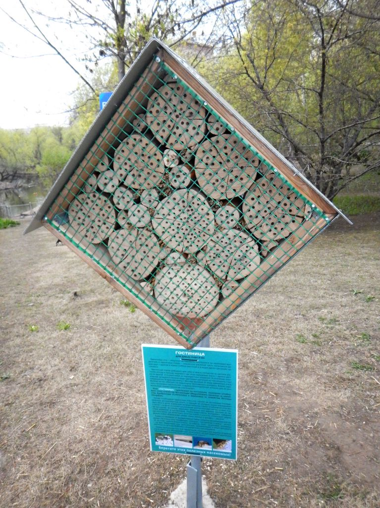 Hotel for single bees and wasps