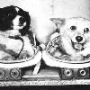The First Canine Cosmonauts